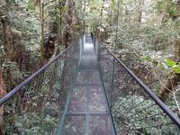 17 Tage Rundreise Costa Rica – einzigartige Naturreise San José – Vulkane Poas & Arenal – Braulio Carrillo NP – Cahuita NP – Tortuguero NP – Monteverde – Santa Elena – Carara NP – Marino Ballen (1205)