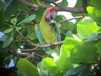 17 Tage Rundreise Costa Rica – einzigartige Naturreise San José – Vulkane Poas & Arenal – Braulio Carrillo NP – Cahuita NP – Tortuguero NP – Monteverde – Santa Elena – Carara NP – Marino Ballen (1252)