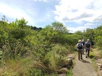 17 Tage Rundreise Costa Rica – einzigartige Naturreise San José – Vulkane Poas & Arenal – Braulio Carrillo NP – Cahuita NP – Tortuguero NP – Monteverde – Santa Elena – Carara NP – Marino Ballen (1361)