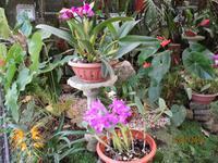 Lankester Botanischer Garten