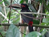 Tierwelt Costa Ricas