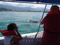 Delfine beim Marino Ballena National Park