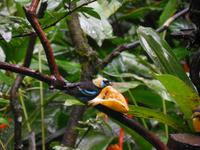 058 Costa Rica - Danaus Eco Center