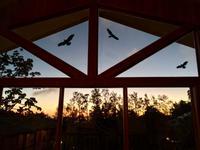 der Yogaraum in Monteverde