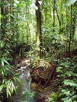 Dominica - Emerald Pool