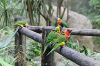 Guadeloupe - Parc National de la Guadeloupe