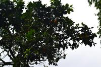 Bluemountains Jamaika (18)