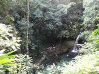 Emerald Pool - Dominica