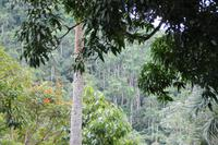 Orchideengarten in Soroa