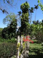 Soroa - Orchideengarten