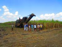 Auf dem Zuckerrohrfeld