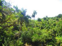 Kubas herrliche Natur