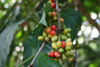Stopp_an_Kaffeeplantage