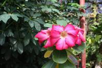 Im Botanischen Garten bei Cienfuegos