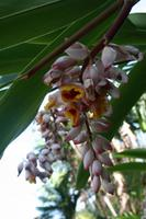 Orchideengarten Soroa