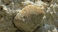 0197 Fahrt nach Baracoa - Fossilien