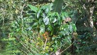 0747 Wanderung im Parque Guanayara