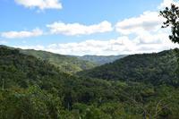 Das Guanayara-Gebirge ist dicht bewaldet