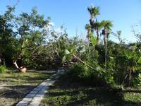 Im Strandhotel  Santa Maria sieht man an den Pflanzen die Auswirkung von Irma an