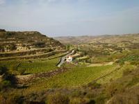 Blick vom Weingut