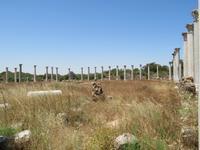 in Salamis