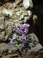 Persephone-Höhenwanderweg
