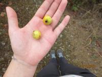 Beeren waren genießbar