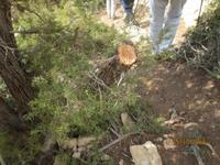 abgesägter Baumstamm für uns