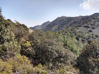 194 Cypern-Cedern am Madari