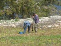 Neupflanzung von Weinstöcken bei Panayia