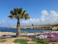 Spaziergang nach Paphos