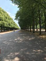 Herrenhäuser Gärten - die Lindenallee nach Hannover