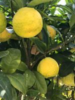 Herrenhäuser Gärten: Im Orangenparterre