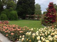Rosengarten auf der Insel Mainau10