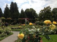 Rosengarten auf der Insel Mainau6