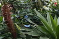 Szene im Schmetterlingshaus Mainau
