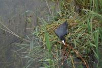 Durch die Regenfälle der letzten Tage liegen die Eier im Wasser, da muss unermüdlich nachgebessert werden.