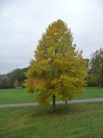 ... und vor dem Museum   -   mitten im Herbst