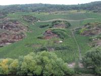 Steile Weinhänge bei Ürzig