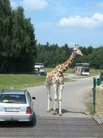 Impressionen aus dem Serengetipark Hodenhagen