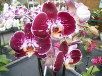 Orchideenzentrum Wichmann in Celle