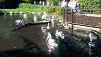 Walsrode. Weltvogelpark