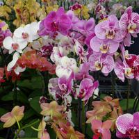 Orchideen Zentrum Wichmann