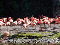 Weltvogelpark Walsrode (bei den Flamingos...)