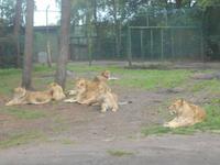Serengeti-Park Hodenhagen (Serengeti-Bustour)