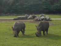 Serengeti-Park Hodenhagen (Dschungel-Safari)