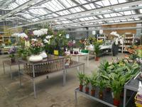 Orchideen-Zentrum