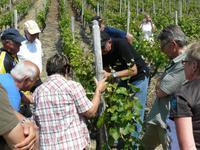 Bei der Weinverkostung in Bad Neuenahr