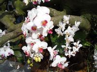 Orchideenhaus auf der Insel Mainau