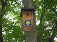 Brutkasten für Zugvögel?